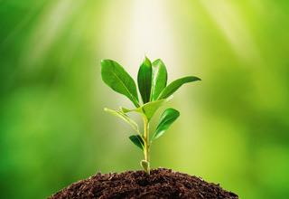 Buy herb seeds online