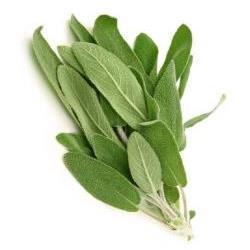 Sage Plants for Sale: Buy Sage Plants Online